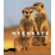 Meerkats by Nigel Dennis