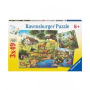 Puzzle paudre zoo si animale domestice 3x49 piese