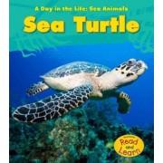 Sea Turtle by Louise Spilsbury