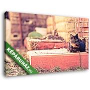 Perzsa cica a ház mellett (40x25 cm, Vászonkép )