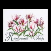 447A Rembrandt Tulips Borduurpakket
