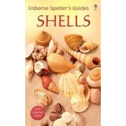 Shells by Graham Saunders