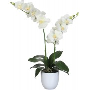 Mica Decorations - Phalaenopsis Creme - In Bloempot Tusca Wit