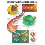Understanding Cholesterol Anatomical Chart by Anatomical Chart Company