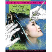 A Colorful Introduction to the Anatomy of the Human Brain by John P. J. Pinel