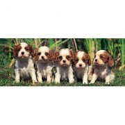 Cavalier King Charles Spaniels 1000 Piece Puzzle