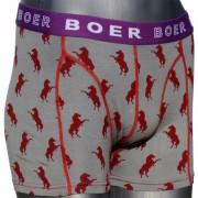 Boer Boer Horse