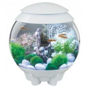 BiOrb Halo aquarium 30 liter LED wit