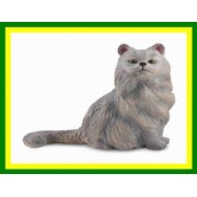 Collect A Persian Cat (Sitting)