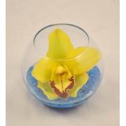 Bol cu orhidee cymbidium