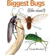 Biggest Bugs Life-Size by George Beccaloni