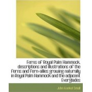 Ferns of Royal Palm Hammock, Descriptions and Illustrations of the Ferns and Fern-Allies Growing Nat by John Kunkel Small
