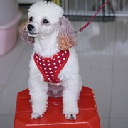 Cães Arreios Luzes LED Vermelho / Preto / Azul / Rosa Téxtil