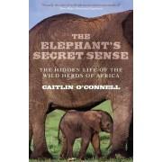 The Elephant's Secret Sense by Caitlin O'Connell