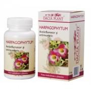 Harpagophytum (Gheara diavolului) - pentru sistemul osteo-articular si muscular