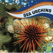 Sea Urchins by Jody Sullivan Rake