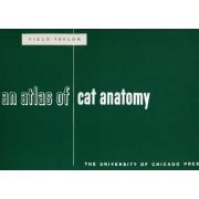 An Atlas of Cat Anatomy by Hazel Elizabeth Field