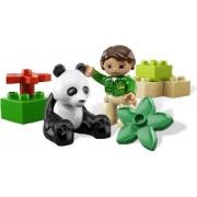 6173 Panda