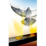 Gel – repelent pentru alungarea păsărilor (porumbei, pescaruși) Bird free optical gel - 1 cutie
