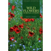 Pocket Guide to Wild Flowers of Britain & Europe by Helen L. Pursey
