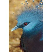Victoria Crowned Pigeon, Birds of the World: Blank 150 Page Lined Journal for Your Thoughts, Ideas, and Inspiration