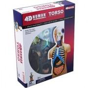 4D Vision Human Anatomy Torso Model by Fame Master