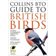 Collins BTO Guide to British Birds by Paul Sterry