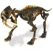 Geoworld Double Excavation Kit 23211138 T-Rex & Sabre Tooth Tiger - Kit de excavacin con 2 esqueletos de dinosaurio [importado de Alemania]