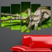 Декоративен панел за стена с екзотичен зоо мотив - тарантула Vivid Home