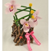 Aranjament cu orhidee si craspedia