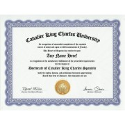 Cavalier King Charles Spaniel Degree: Custom Gag Diploma Doctorate Certificate (Funny Customized Joke Gift - Novelty Item)