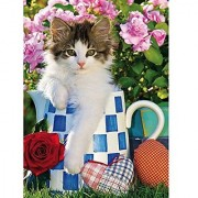Creative Toy Company High Quality Collection Tabby Kitten 1000 Piece Puzzle