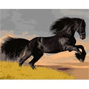 [ New Release, Wooden Framed or Not ] Diy Oil Painting by Numbers, Paint by Number Kits - Black Steed Horse 16*20 inches - PBN Kit for Adults Girls Kids Christmas - D82
