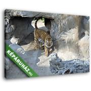 Tigris a barlangnál (40x25 cm, Vászonkép )
