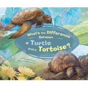 What's the Difference Between a Turtle and a Tortoise? by Trisha Speed Shaskan