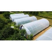 Solar Family 72 mp