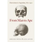 From Man to Ape by Adriana Novoa