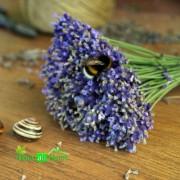 Ulei de Parfum de Lavanda 100% 10 ml