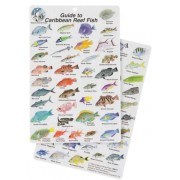 Guide to Caribbean Reef Fish