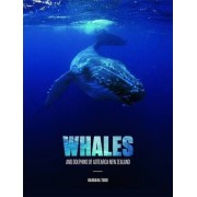 Whales Tohora by Barbara Todd