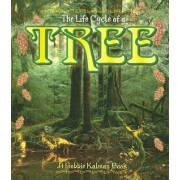 The Life Cycle of a Tree by Kathryn Smithyman