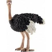 Figurina Schleich Ostrich