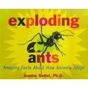 Exploding Ants by Joanne Settel