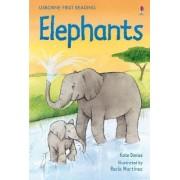 Elephants by Kate Davies