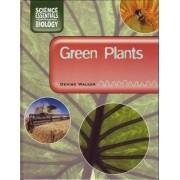 Green Plants by Denise Walker