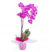 Interflora Planta de orquidea - Índico