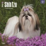 2017 kalender met Shih Tzu honden