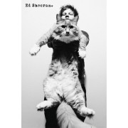 Ed Sheeran Cat Maxi Poster