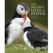 The Secret Lives of Puffins by Dominic Couzens