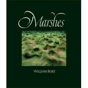 Marshes by William Burt